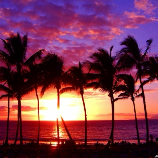 Lets go to Hawaii