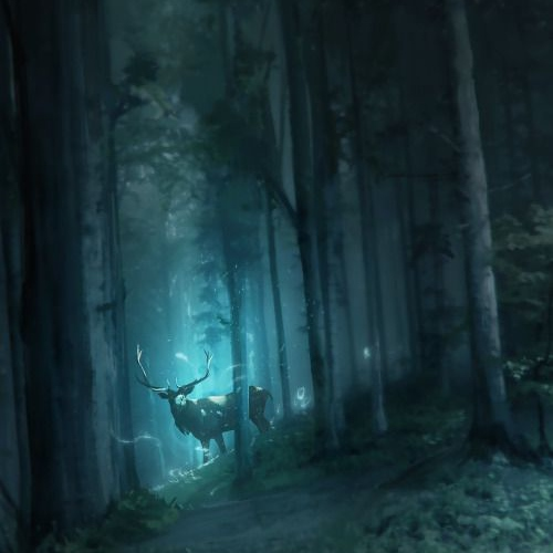 Night in the Enchanted Forest