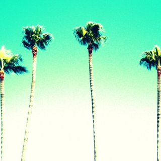 palm trees and paradise