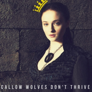 Callow Wolves Don't Thrive