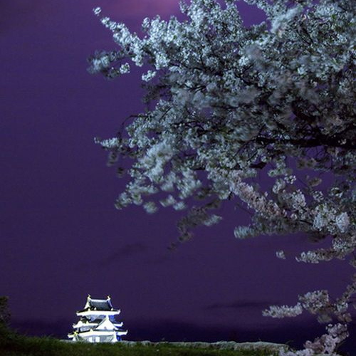 Night At the Japanese Castle