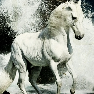 horse with no rider