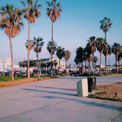 beaches and palm trees