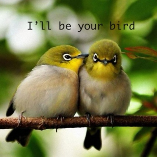 i'll be your bird