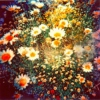 Focusing is Chill