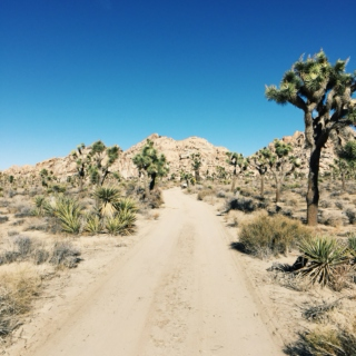 spent a month thinking I was a high desert tree