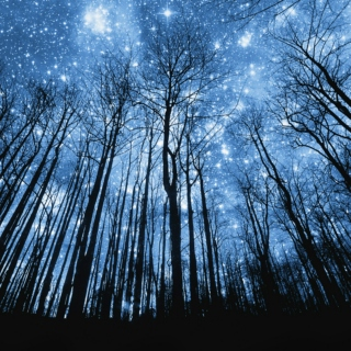Look to the skies; see your reflection in the stars