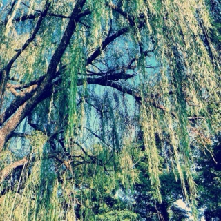 under the willow tree;