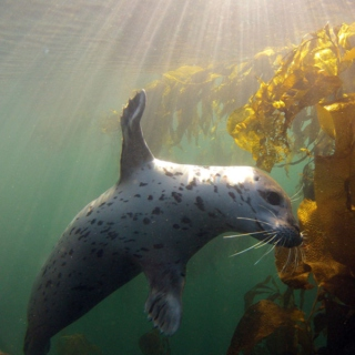 songs for seals