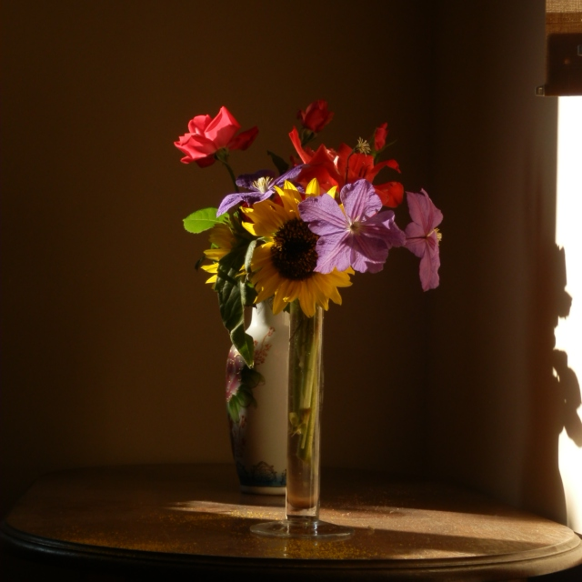 Flowers in soft afternoon light