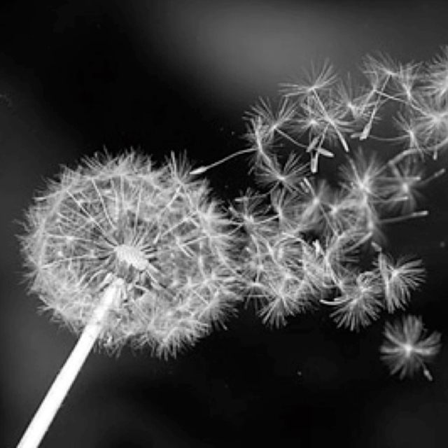 Wildflowers: Dispersion By Explosion