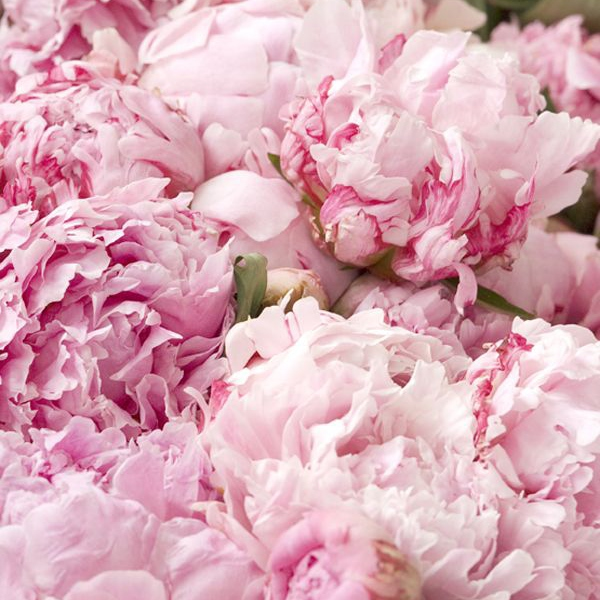 Peonies on the river Thames