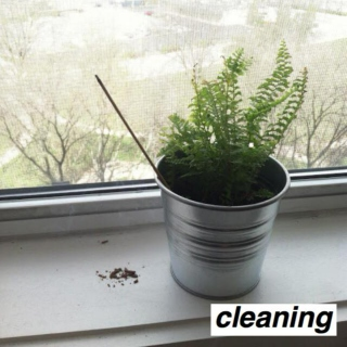 cleaning;