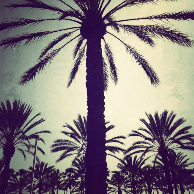 Palm trees and beach feats