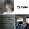 the strays ☠