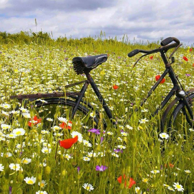 summer bicycle ride
