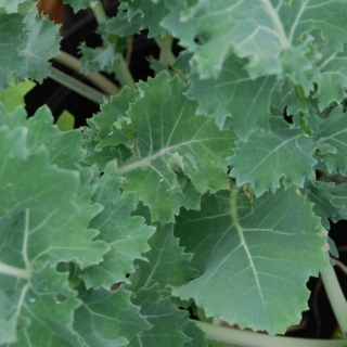 A Hint of Kale