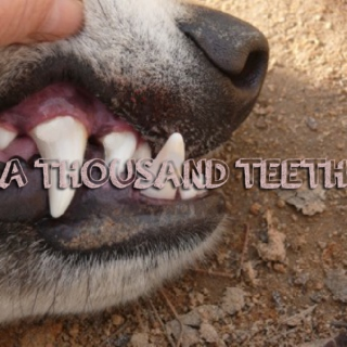 a thousand teeth