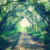 Music Is The Forest I Want To Get Lost In