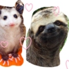 sloths and opossums can be friends