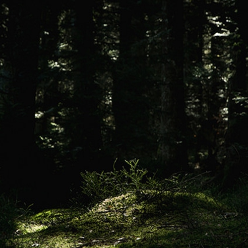 tell me about the forest