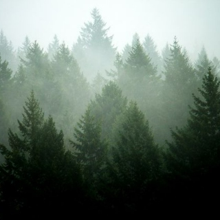 Forest Songs
