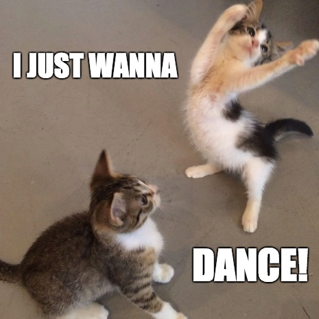 Everybody dance meow