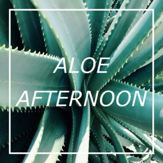 aloe afternoon