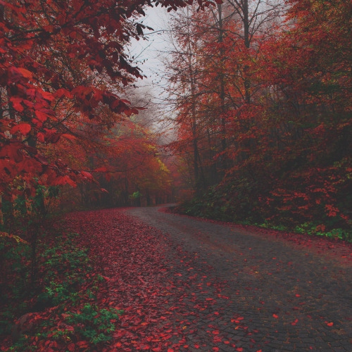 06.september.2015 (or Autumn sounds)