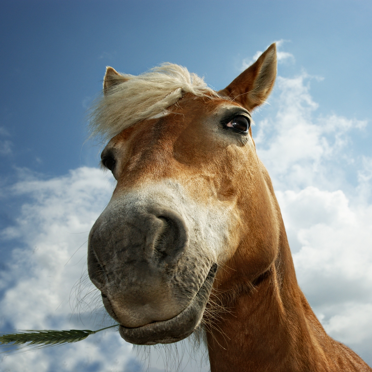 how to tell if a horse is fit and happy