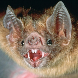 BROODY TUFF EMO MIX (WARNING REAL DARK TOO DARK GOOD FOR MAXIMUM BROODING)