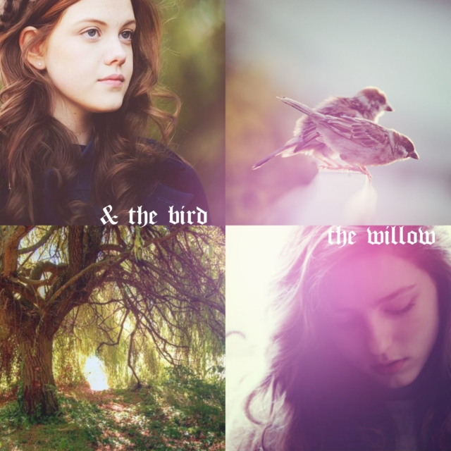 The Willow and The Bird