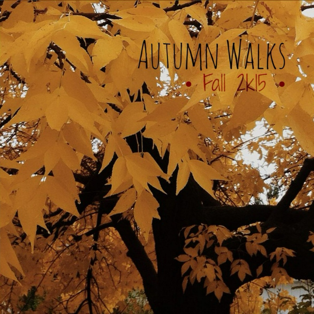 ❃ Autumn Walks ❃ || Fall 2k15
