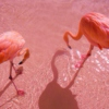 flamingo's power