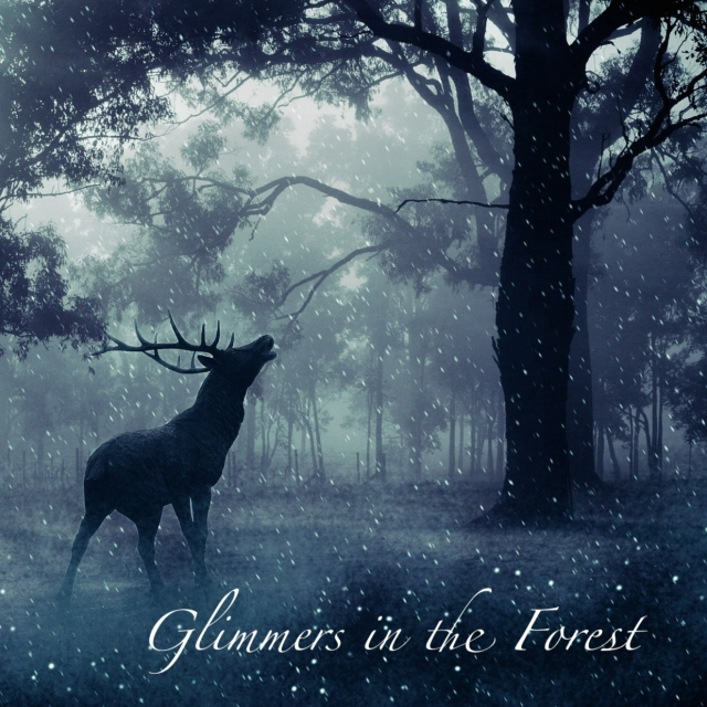 Glimmers in the Forest