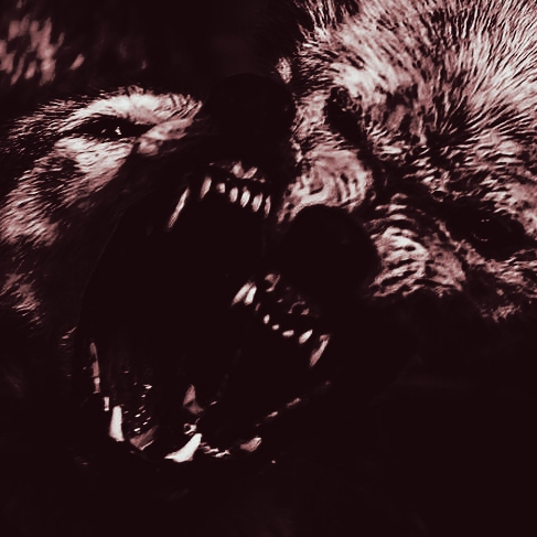 the wolves, they've come ☽