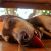 Low Speed Jams for Tired Dogs