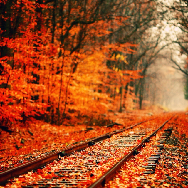 Image result for fall aesthetic
