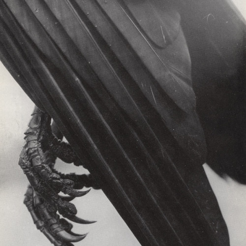 raven wings and pretty things