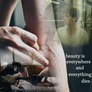 beauty is everywhere, and everything dies