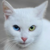 See These Eyes: One Cat's Tribute to David Bowie