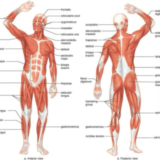 Diagram of the Physical Body