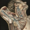 Brachial Plexus - The study playlist