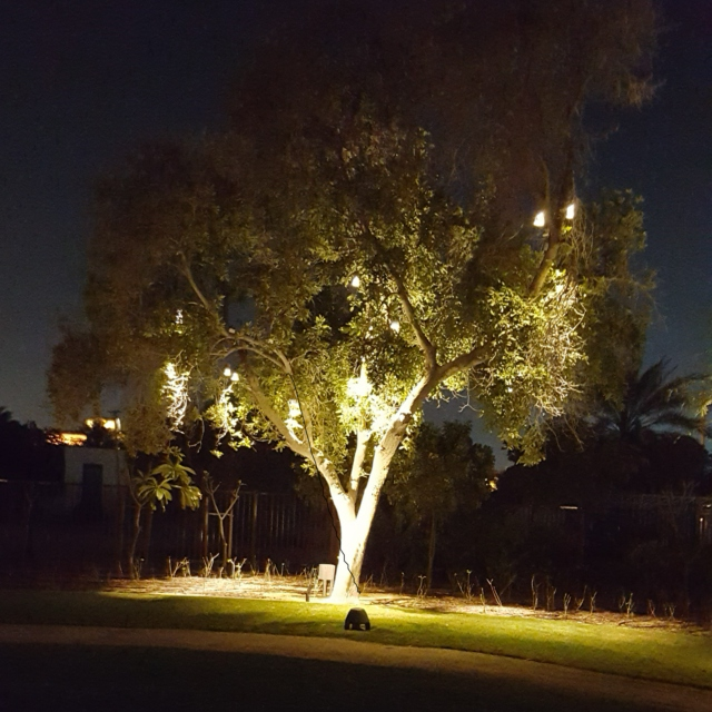 Under the Tree of Light and Melody