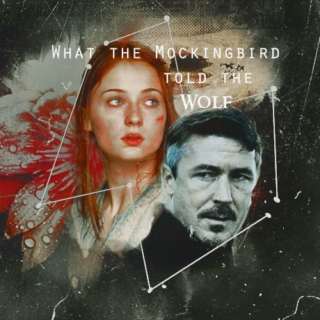 What the Mockingbird Told the Wolf