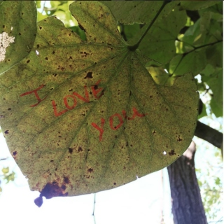 The Leaf Who Loves You