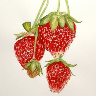 but strawberries can be sour too - side b