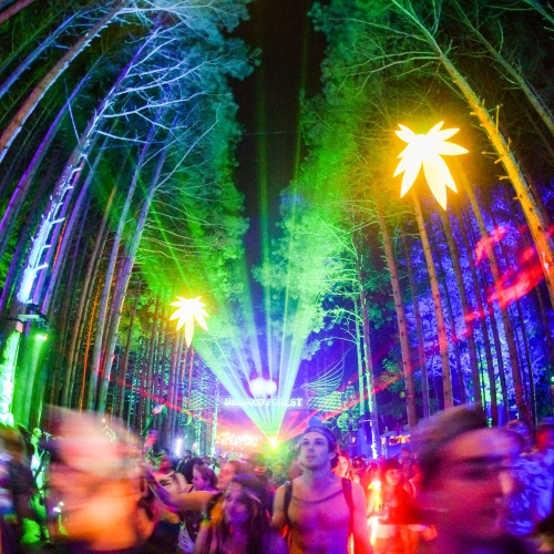 FOREST 2016
