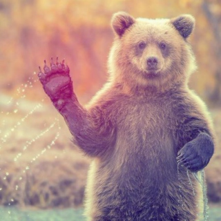 A Beary Coachella Playlist I