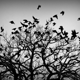 The Boy Who Dances with Crows